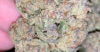 purple trainwreck by humboldt seed organization strain review by thatcutecannacouple