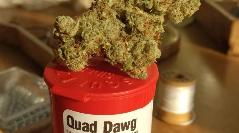 quad dawg by ripped city gardens strain review by pdxstoneman