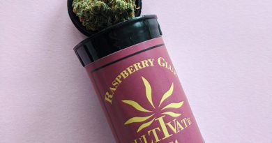 raspberry glue by ieso strain review by upinsmokesession
