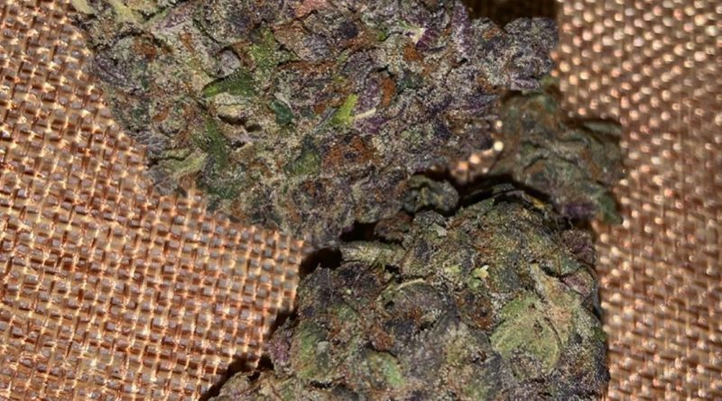 raspberry kush strain review by thatcutecannacouple