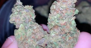 sunset sherbet by sherbinskis strain review by thatcutecannacouple