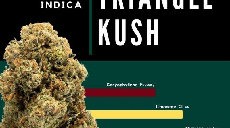 triangle kush by calyx peak strain review by ohio_marijuana