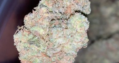 triangle mints by seed junky genetics strain review by thatcutecannacouple