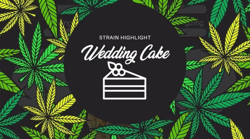 wedding cake by woodward fine cannabis strain review by ohio_marijuana