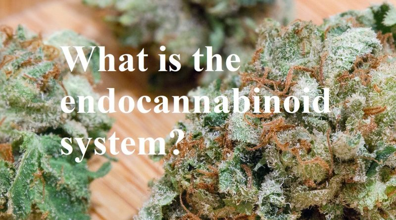 what is the endocannabinoid system thehighestcritic