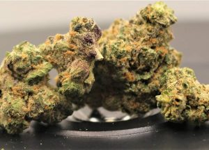 apple fritter by lumpy's flowers strain review by cannasaurus_rex_reviews 2