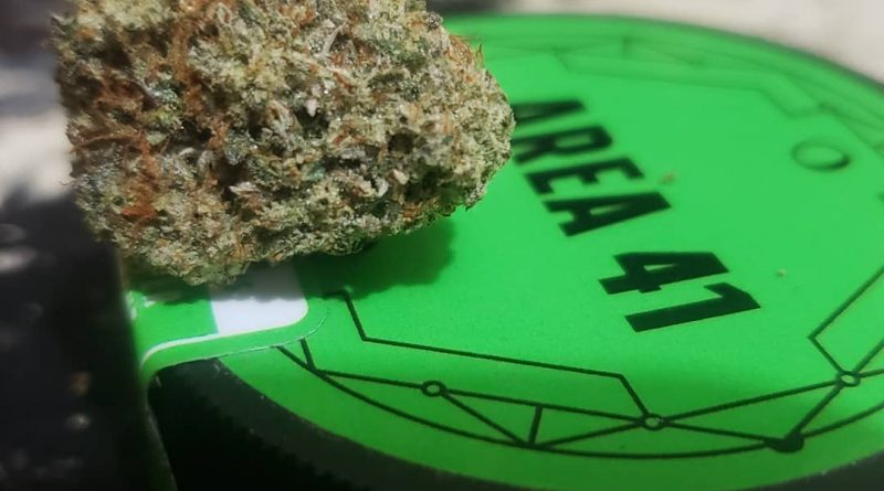 area 41 by alien labs strain review by cannasaurus_rex_reviews