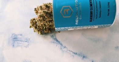 blueberry clementine by revolution cannabis strain review by upinsmokesession