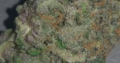 cotton candy by delicious seeds strain review by sticky_haze420