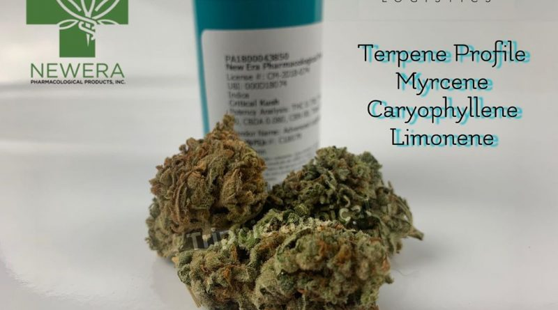 critical kush from new era pharmacological products strain review by trippietropical 2