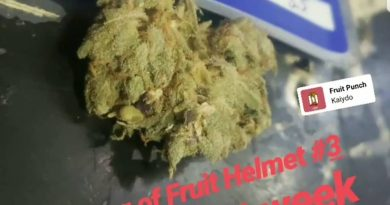 fruit helmet #3 by ocean grown seeds strain review by cannasaurus_rex_reviews