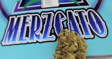 merzcato by flower child farms strain review by cannasaurus_rex_reviews