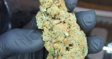 rainmaker by riverland remedies strain review by cannaquestions