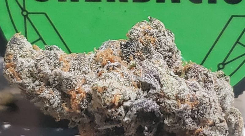 sherbacio by alien labs strain review by cannasaurus_rex_reviews