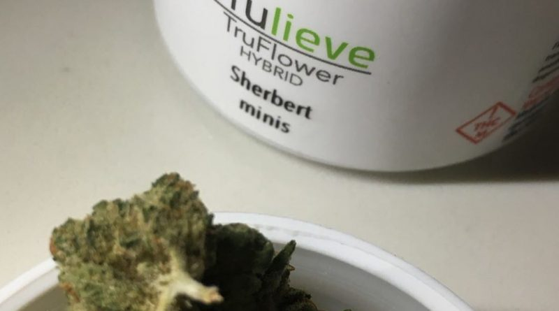 sherbert minis dark trichomes from trulieve strain review by indicadam