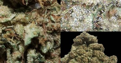 shockwave by luigi farms strain review by cannasaurus_rex_reviews
