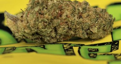 tangeray strain by growing passion strain review by cannasaurus_rex_reviews