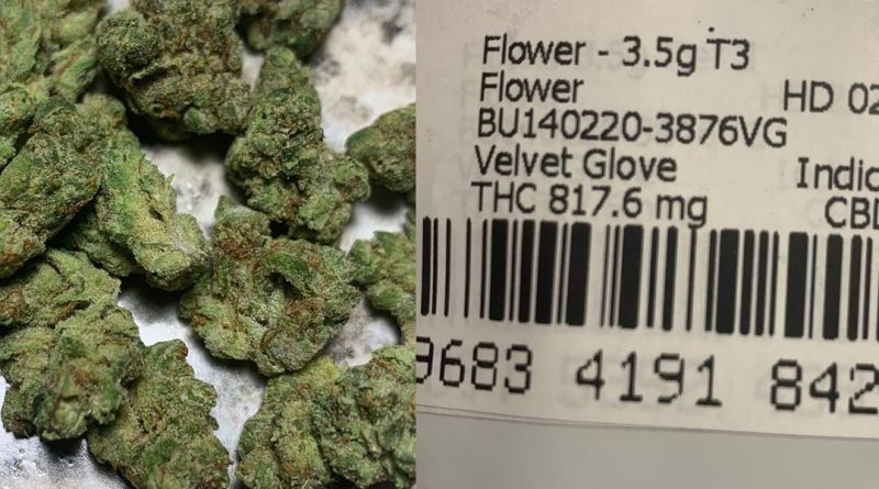 velvet glove from muv florida strain review by sticky_haze420