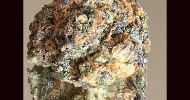 wedding pie from the green temple strain review by okcannacritic