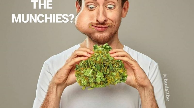 why do i get the munchies faq by cannaquestions photocred to buds2be
