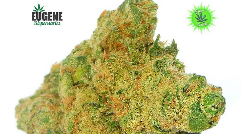 ancient og from green therapy strain review by eugene.dispensaries