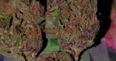 forbidden fruit by pacific stone strain review by hall.of.flamez 2