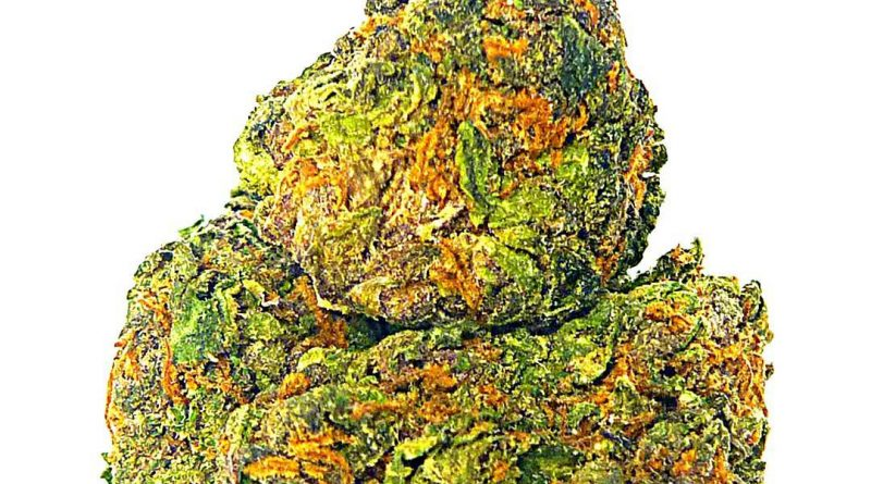 jager by porta farms strain review by eugene.dispensaries