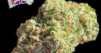 london mints by the jar genetics strain review by okcannacritic
