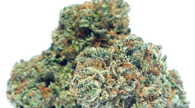 master kush by bend bud company strain review by eugene.dispensaries