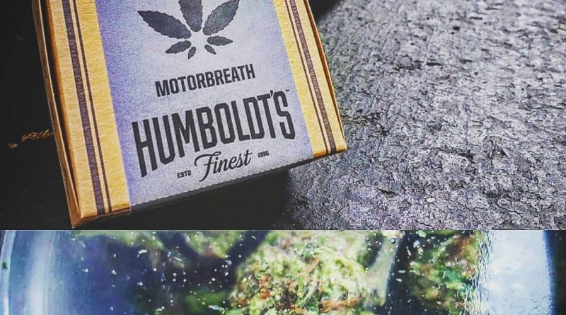 motorbreath by humboldt's finest strain review by herbtwist