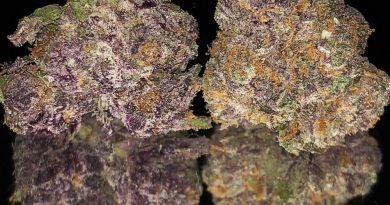 ninja vader by the territory cannabis company strain review by okcannacritic
