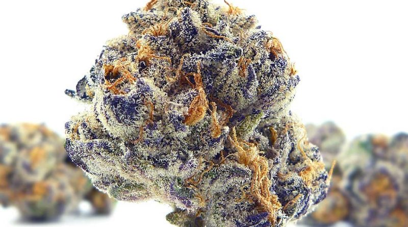 poison fruit by urban canna strain review by eugene.dispensaries