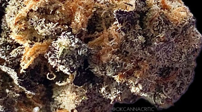 sherbet cookies by eclipse pharms strain review by okcannacritic