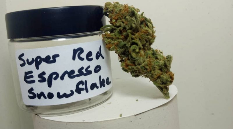 super red espresso snowflake by old world organics strain review by pdxstoneman 2