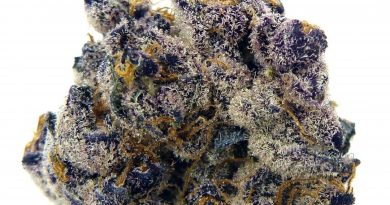 tropicana cookies by deschutes growery strain review by eugene.dispensaries