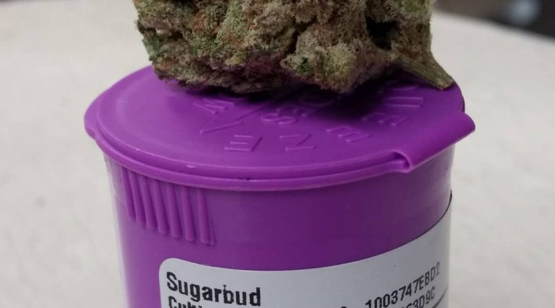 animal face by sugarbud strain review by pdxstoneman
