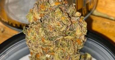 bay breath by grizzly peak strain review by trunorcal420