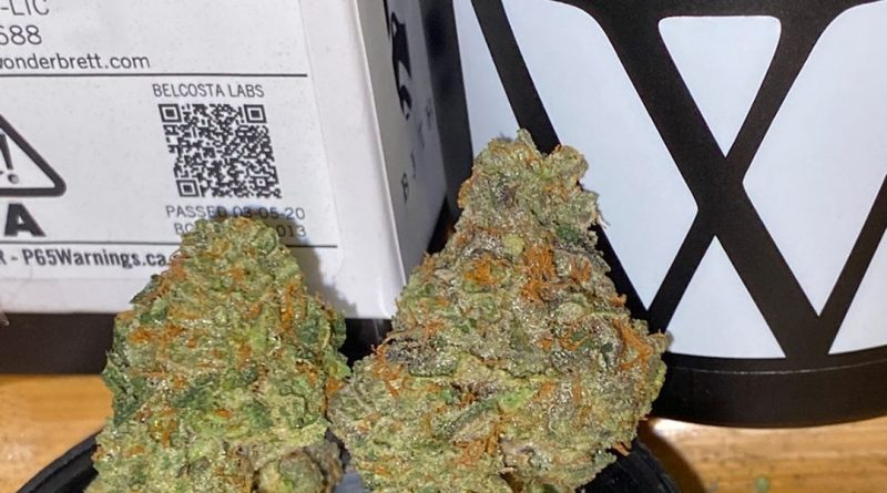 black orchid by wonderbrett strain review by trunorcal420 3