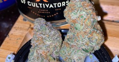 g-mints by sf cultivators strain review by trunorcal420