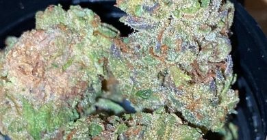 ice cream cake by elyon cannabis strain review by trunorcal420 2