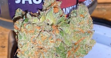 kosher jack by pearl pharma strain review by trunorcal420