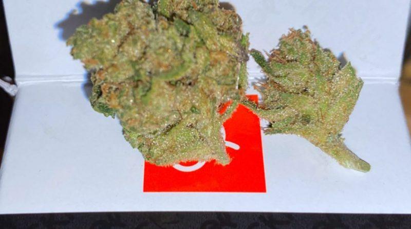 kuzzo fly kookies by cherry kola farms strain review by trunorcal420 3