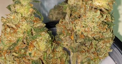mango kush by grizzly peak strain review by trunorcal420