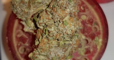 orange sherbert by barney's farm strain review by ninthtimelucky