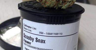 scooby snacks by injoy cannabis strain review by pdxstoneman