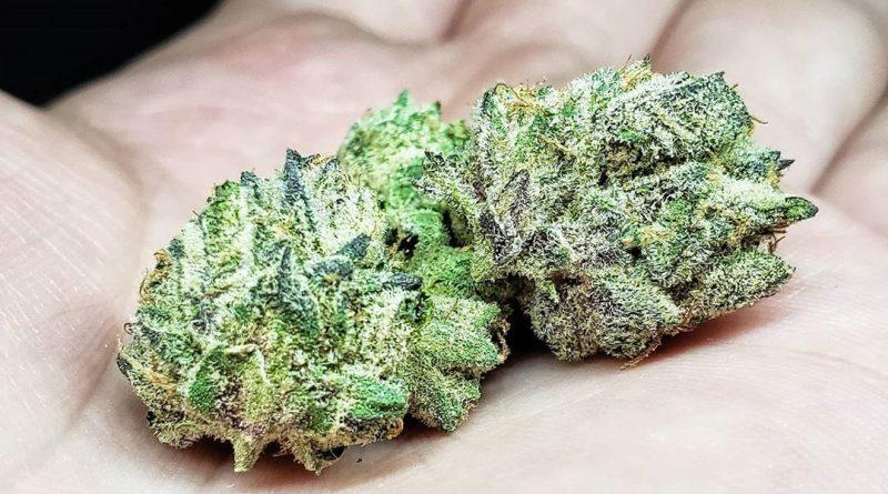 alien mints by alien labs strain review by thefirescale 2
