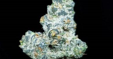apple fritter from los angeles farmers strain review by thefirescale