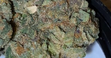 bananalato by synergy cannabis strain review by trunorcal420 3