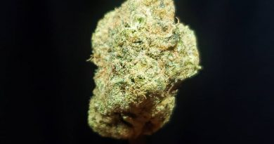 cake mix by the real lemonnade strain review by thefirescale 2