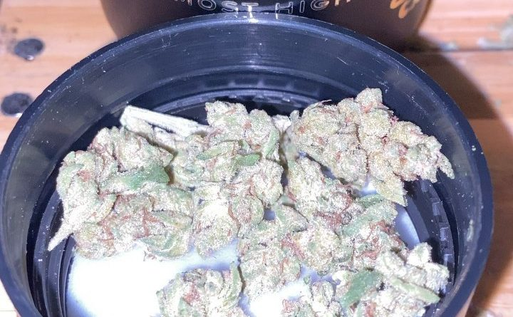 fatso by elyon cannabis strain review by trunorcal420
